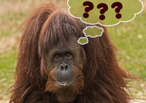 Foto Affe mit 3 Fragezeichen